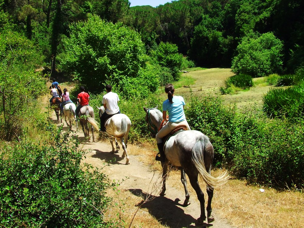 Animal Assisted Addiction Treatment- 6 people ride down a trail on horses walking away from the camera.